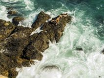 在马利布、绿宝石和大海的封印在峭壁围拢的相当天堂海滩 Dume小海湾,马利布,加利福尼亚,加州 免版税库存照片