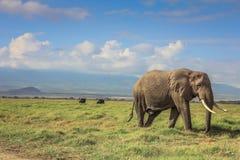 在马塞人玛拉肯尼亚的非洲大象 免版税库存图片