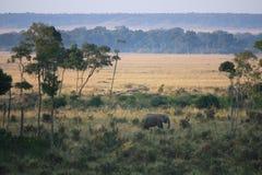 在马塞人的大象 免版税图库摄影