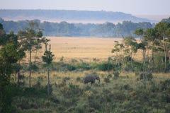 在马塞人的大象 图库摄影