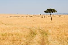在马塞人Mara国家储备的宽大草原 库存图片