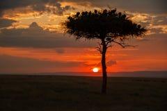 在马塞语玛拉的日落 免版税库存照片