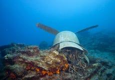 在马尔代夫,一个被击毁的航空器看起来水下 免版税库存照片