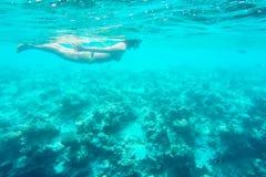 在马尔代夫海岛附近的异乎寻常的海洋生物 库存照片