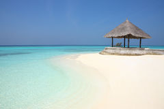 在马尔代夫海滩的树荫处 库存照片