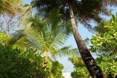 在马尔代夫海滩的椰子树 免版税库存照片
