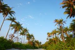 在马尔代夫海滩的椰子树 库存图片