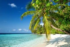 在马尔代夫的海滩 免版税库存图片