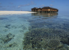 在马尔代夫的珊瑚礁 免版税图库摄影