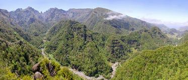 在马德拉岛海岛,葡萄牙上的月桂树森林 免版税库存照片