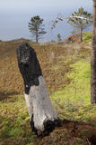 在马德拉岛的倾斜的被烧的树桩 免版税库存照片