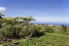 在马德拉岛的海岛上的菜园,俯视Atlan 库存照片