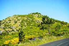 在马德拉岛的海岛的北部的山 库存照片