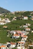 在马德拉岛Wine Company, Estreito de Camara de罗伯斯,马德拉岛的葡萄园的看法, 免版税图库摄影