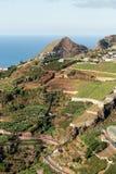 在马德拉岛Wine Company, Estreito de Camara de罗伯斯,马德拉岛的葡萄园的看法 库存图片