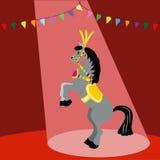 在马戏的马 免版税库存图片
