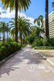 在马拉加,西班牙骑自行车车道循环在棕榈树之间 免版税库存照片
