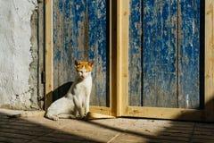 在马拉喀什和索维拉街道上的街道猫在摩洛哥在渔港和麦地那在墙壁附近 免版税库存图片