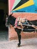 在马拉喀什街道的驴 图库摄影