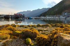 在马掌海湾加拿大的低潮 免版税库存图片
