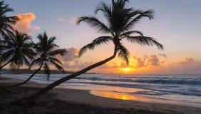 在马提尼克岛海岛,法属西印度群岛上的日落 免版税库存图片