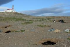 在马格达莱纳海岛上的灯塔  在企鹅圣所的Magellanic企鹅在马格达莱纳海岛上在Magel海峡  库存照片