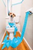 在马桶座的狗 免版税库存图片