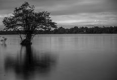 在马瑙斯附近的亚马孙河 免版税图库摄影