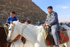 在马的孩子漫步在金字塔埃及 免版税库存照片