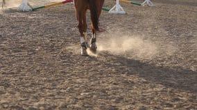 在马的蹄的特写镜头视图在日落的 影视素材