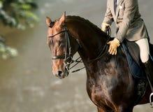 在马的车手 免版税库存图片