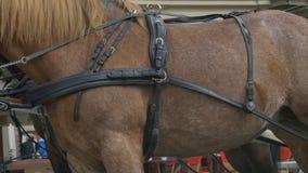 在马的鞔具 影视素材