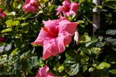 在马耳他的花 图库摄影