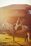 在马背上女孩在日落 免版税图库摄影