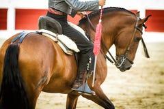 在马背上斗牛士西班牙语 库存照片