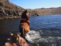 在马背上穿过河的蒙古牧民 免版税库存图片