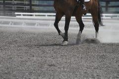 在马背上跳舞 免版税库存照片