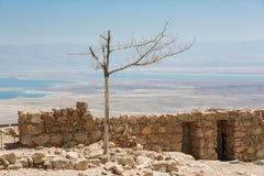 在马萨达国民Pakk的偏僻的干燥树 免版税库存图片