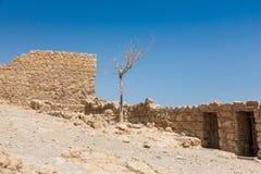 在马萨达国民Pakk的偏僻的干燥树 库存照片