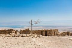 在马萨达国民Pakk的偏僻的干燥树 库存图片