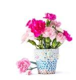 在马赛克花盆的康乃馨 库存图片