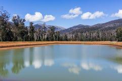 在马里斯维尔,澳大利亚附近的被烧焦的小山 免版税库存图片