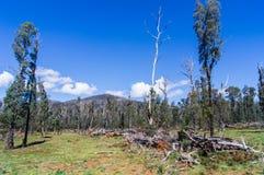 在马里斯维尔,澳大利亚附近的被烧焦的小山 免版税库存照片