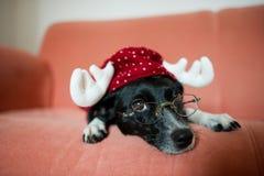 在驯鹿衣服的逗人喜爱的黑白狗在一个红色沙发放置 免版税图库摄影