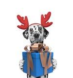 在驯鹿鹿角的圣诞老人狗有新年礼物的 库存照片