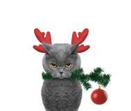 在驯鹿鹿角的逗人喜爱的圣诞老人猫有冷杉木和xmas球的 库存照片