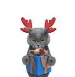 在驯鹿鹿角的逗人喜爱的圣诞老人猫有新年礼物的 库存照片