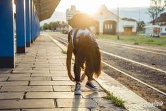 在驻地的女孩等待的火车 图库摄影