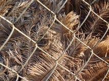 在驼鸟的仔细的审视在金属笼子后用羽毛装饰 库存照片