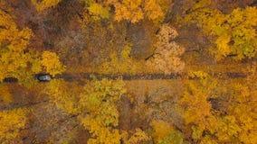 在驾车的鸟瞰图通过秋天森林公路 风景秋天的横向 股票录像